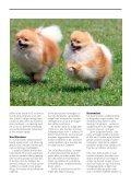 NEUTRALISERING - Dyrefondet - Page 3