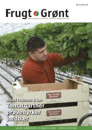 Tomatgartner prøvedyrker jordbær - Gartneribladene