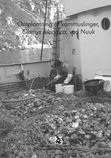 Omplantning af kammuslinger ved Nuuk - Grønlands Naturinstitut