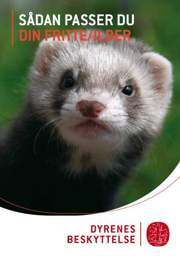 SÅDAN PASSER DU DIN FRITTE/ILDER - Dyrenes Beskyttelse
