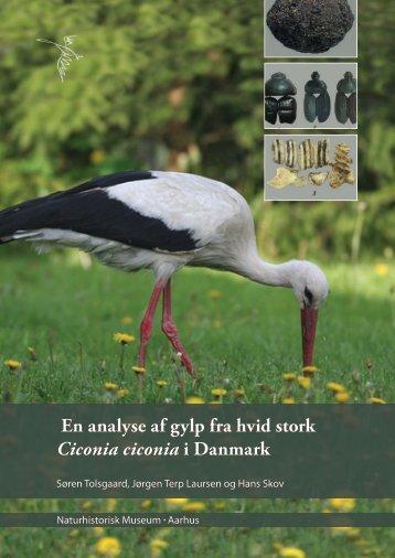 En analyse af gylp fra hvid stork Ciconia ciconia i Danmark