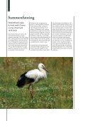 En analyse af gylp fra hvid stork Ciconia ciconia i Danmark - Page 4
