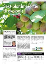 Seks blommesorter til økologi