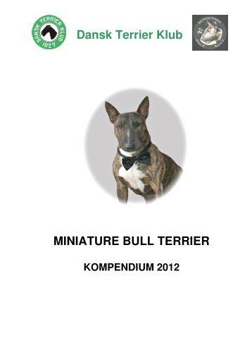 Kompendium - miniature bull terrier website