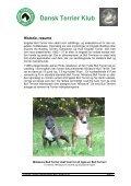 Kompendium - miniature bull terrier website - Page 4