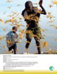 """Kanon Natur - insekter"" som pdf - Naturstyrelsen - Page 2"