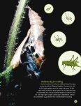 """Kanon Natur - insekter"" som pdf - Naturstyrelsen - Page 7"