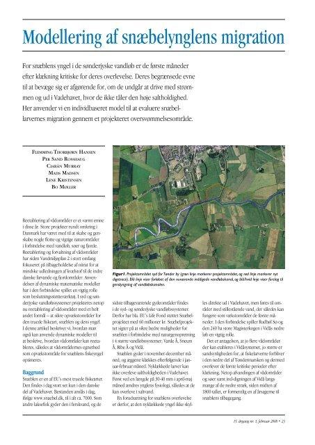 Modellering af snæbelynglens migration - SNÆBEL-PROJEKTET