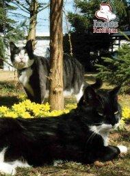 Ma j 2011 - årg ang 30 - nr. 2 - Inges Kattehjem