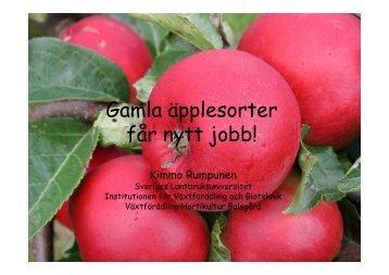 Gamla äpplesorter får nytt jobb - NordGen
