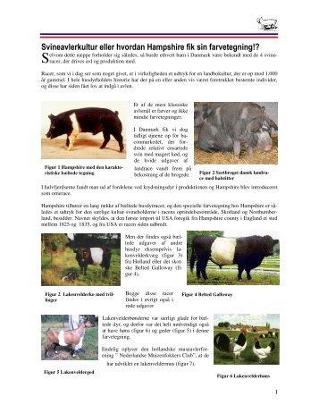 Svineavlerkultur eller hvordan Hampshire fik sin farvetegning!?