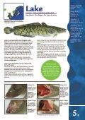 FAKTA OM FISK & SKALDJUR - Svensk Fisk - Page 5