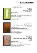 Arabisk skønlitteratur for voksne 2008-2009 - Statsbiblioteket - Page 3