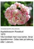 UNIKA PELARGON - Solberga Blommor - Page 2