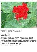 UNIKA PELARGON - Solberga Blommor - Page 3