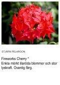 UNIKA PELARGON - Solberga Blommor - Page 6