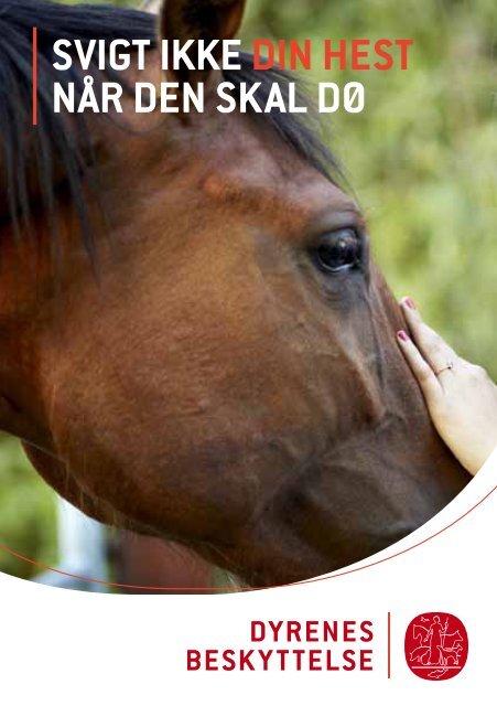 Svigt ikke din hest når den skal dø - Dyrenes Beskyttelse