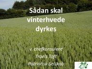 Sådan skal vinterhvede dyrkes (indlæg på ... - LandbrugsInfo