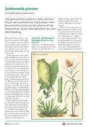 Sukkersøde planter - Dansk Botanisk Forening