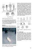 Hvad er forskellen på Alger, Laver, Svampe, Skimmel og Bakterier - Page 3