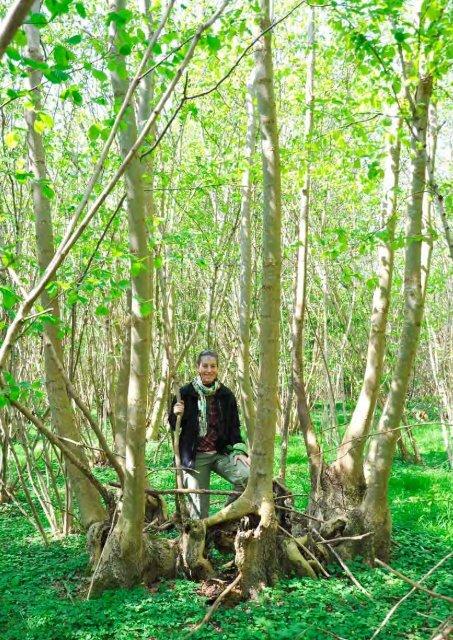 Drift af stævningsskove - Profil, Julia Gram-Jensen