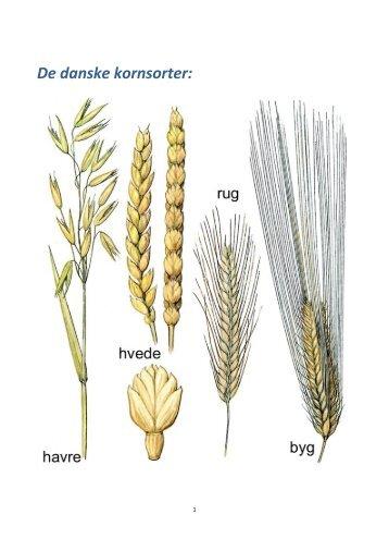 De danske kornsorter: