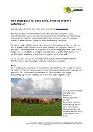 Den økologiske ko, dens kalve, kvien og studen ... - Natur og landbrug