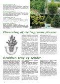 Miniature nåletræer - Webkommunikator - Page 6