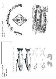 Blad nr. 3 - Vejle Sportsfiskerforening