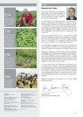 Kun 63 hektar med økologiske jordbær i Danmark - Gartneribladene - Page 3