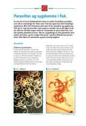 Parasitter og sygdomme i fisk (pdf - 490Kb) - Fiskericirklen