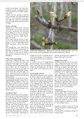 Sødkirsebær koges til delikatesser - Gartneribladene - Page 5