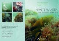 HAVETS PLANTER - Steno Museet