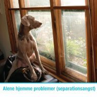 Download Alene hjemme problemer (Separationsangst) - Zylkene