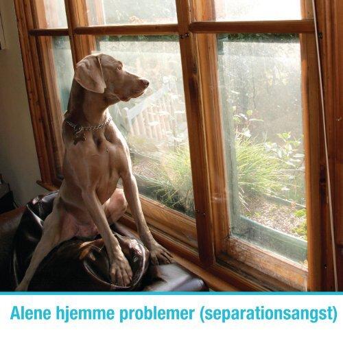 Download Alene hjemme problemer (Separationsangst) - Zylkene
