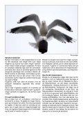 Duer og måger i Aalborg Kommune - Boligselskabet Lykkebo A/S - Page 5