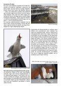 Duer og måger i Aalborg Kommune - Boligselskabet Lykkebo A/S - Page 7