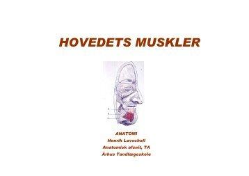 HOVEDETS MUSKLER