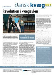 Dansk kvæg nyt nr 21 2008