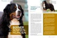 Berner Sennen - Dansk Kennel Klub
