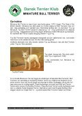 RAS - miniature bull terrier website - Page 4