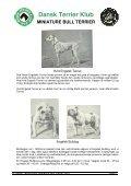 RAS - miniature bull terrier website - Page 5