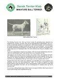 RAS - miniature bull terrier website - Page 6