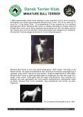 RAS - miniature bull terrier website - Page 7