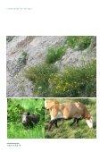 Rapport om den danske flora og fauna - Klimatilpasning - Page 7