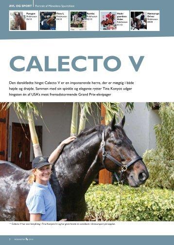 den danskfødte hingst Calecto V er en imponerende herre, der er ...