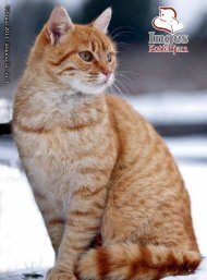 kattene - Inges Kattehjem