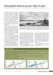Naturprojektet skabte de nye søer i Skjern Å‑dalen - Det tabte land