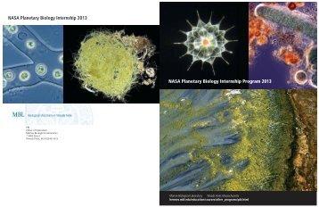 NASA Planetary Biology Internship Program 2013 - Marine ...