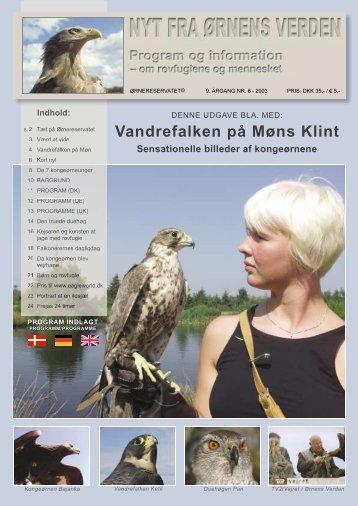 Vandrefalken på Møns Klint - Ørnereservatet